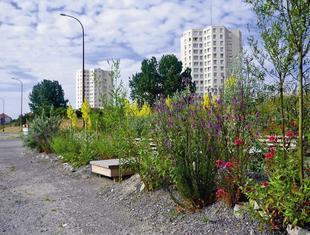 Zielona odnowa miasta – konferencja SAK Miasto od nowa